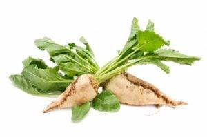 Chicory_root